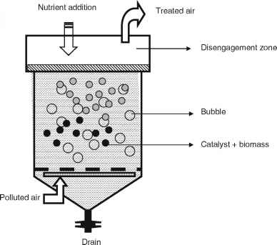 Packed Bed Bioreactor