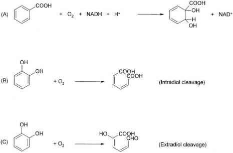 Dehalogenation Post Cleavage