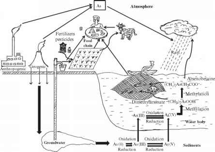 Arsenic Geocycle The Environment